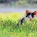 Here Kitty Kitty Kitty by Kerri Farley