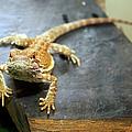 Here Lizard Lizard by Andee Design
