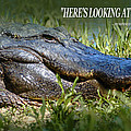 Here's Looking At You Kid by Bob Pardue