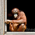 Here's Looking At You by Tom Gari Gallery-Three-Photography
