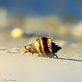 Hermit Crab  by Debra Forand