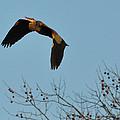 Heron 244a by David McDowell