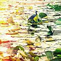 Heron Among Lillies Photography Light Leaks by Chris Andruskiewicz