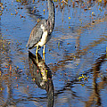 Heron And Reflection In Jekyll Island's Marsh by Bruce Gourley