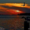 Heron And Seagull Sunset I Mlo by Mark Olshefski