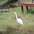 Heron And The Canal by Minnie Davis