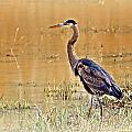 Heron At Sunset by Marty Koch