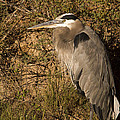 Heron Basking In The Morning Sun by Jean Noren