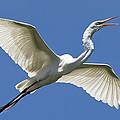 Heron Flight by Kenneth Albin