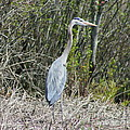 Heron Height by Neal Eslinger