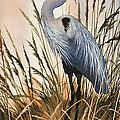 Heron In Tall Grass by James Williamson