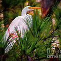 Heron In The Pines by Scott Hervieux