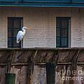 Heron In The Window by Scott Hervieux