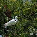 Heron In Tree by Dale Powell