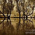 Reflection by Nicki P