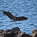 Heron Landing by Eric Johansen