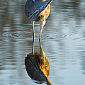 Heron Looking At Its Own Reflection by Andres Leon