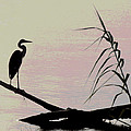 Heron Morning by Kent Dunning
