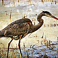 Heron On A Cloudy Day by Marty Koch