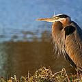 Heron On The Lake by Athena Mckinzie