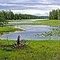 Heron Pond In Grand Teton National Park-wyoming   by Ruth Hager