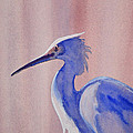 Heron by Shirin Shahram Badie