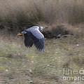 Heron by Steven Ralser