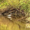 Heron by Traci Law