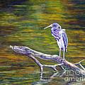 Heron Watching by Alina Martinez-beatriz