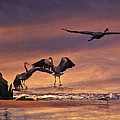 Herons At Sunset by Amy Jackson