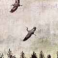 Herons In Flight Monotone by Peggy Collins