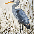 Herons Natural World by James Williamson