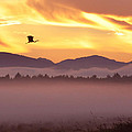 Heron's Sunrise by Michele Broadfoot