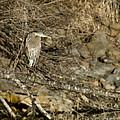 Heron's Winter's Watch by Belinda Greb