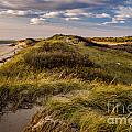 Herring Cove by Susan Cole Kelly