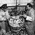 Herring Fishing Howth 1955  by Irish Photo Archive