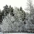 Hersey Lake Under Snow by Elaine Berger