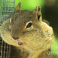 Hey Check Out My Big Cheeks by Jeff Swan