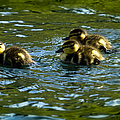 Hey Guys - What's That by Belinda Greb