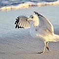 Hey Wait - Sea Gull by Paulette Thomas