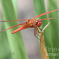 Hi Dragon Fly by John Wilson