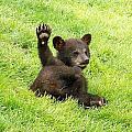 Hi Five Bear by Brad Mayer