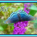 Hi Hello Greeting Card - Red Spotted Purple Butterfly by Mother Nature