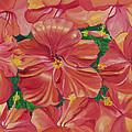 Hibiscus by Annette M Stevenson