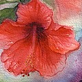 Hibiscus by Bonnie Fernandez