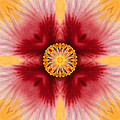 Hibiscus Close-up--kaleidoscope by Don Johnson