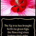 Hibiscus Closeup With Bible Quote From Song Of Songs by Rose Santuci-Sofranko