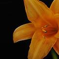 Hibiscus by Dan Peak