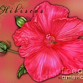Hibiscus Digi by Margaret Newcomb