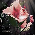 Hibiscus Flower by Gerlinde Keating - Galleria GK Keating Associates Inc